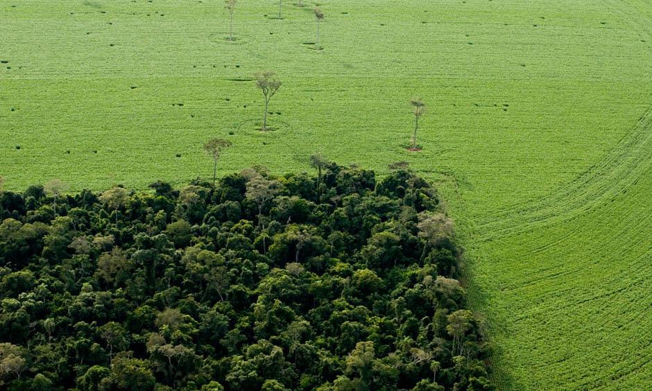 Comment la loi ALUR mange 30 hectares de forêt